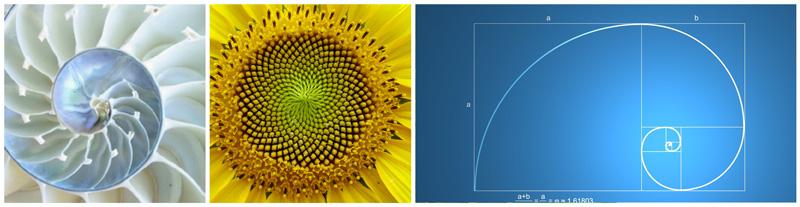 guia-da-alma-musica-que-cura-fibonacci-mm-sorge