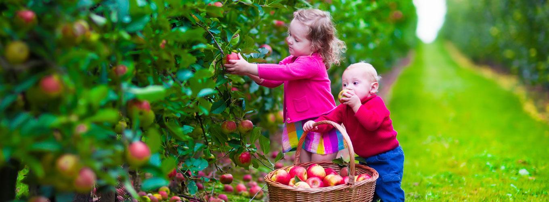 image-alergias-alimentares-e-as-criancas-da-nova-era